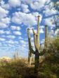 Saguaro heaven....