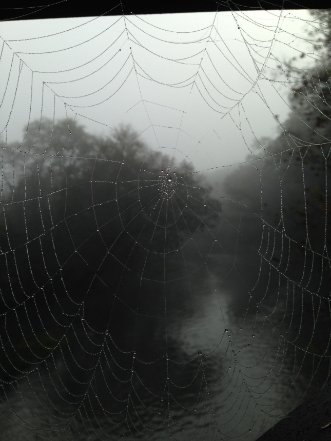 Oh what a beautiful web!